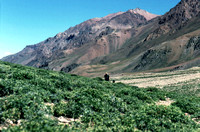 Walking the dusty trail to Aconcagua base camp in Argentina
